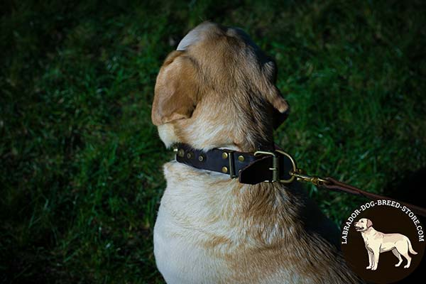 Matchless Leather Labrador Collar with Brass Plated Studs and Fittings