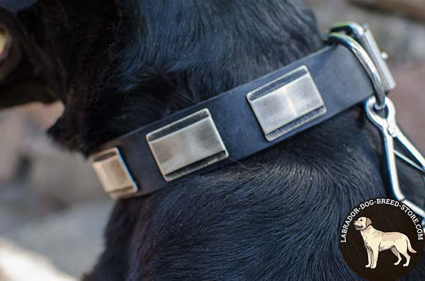 Good-Fitting Leather Labrador Collar with Large Decorative Plates