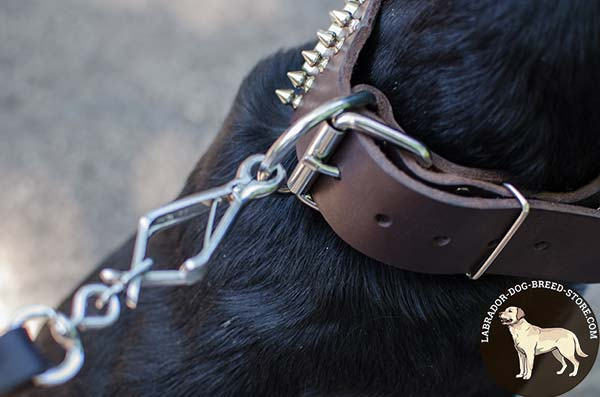 Reliable Leather Labrador Collar with Nickel Plated Fittings