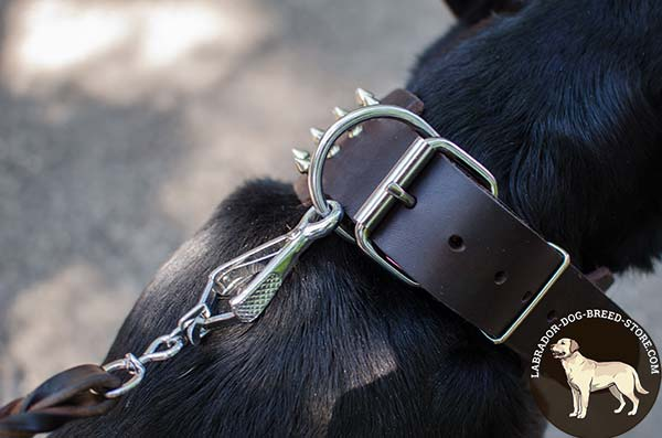 Delicate Leather Labrador Collar with Nickel Plated Hadware and Spikes