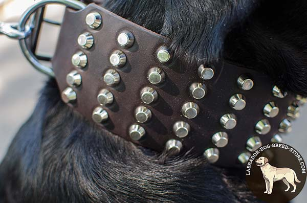 Wide Leather Labrador Collar with Nickel Plated Studs