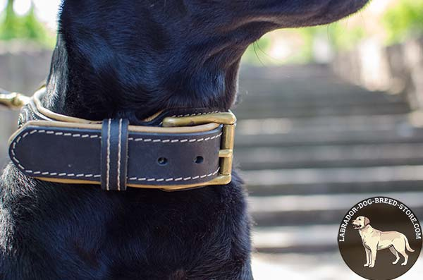 Soft Padded Leather Labrador Collar with Classical Buckle