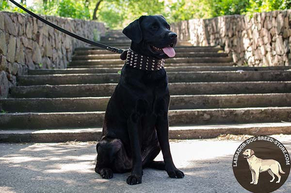 Wide Leather Labrador Collar with Spikes and Pyramids for Everyday Walking