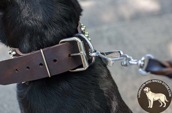 Strong Leather Labrador Collar with Standard Buckle and Nickel Plated Fittings
