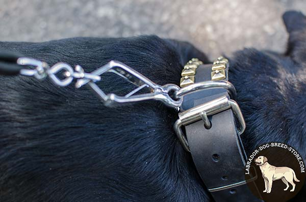 Trendy Studded Leather Labrador Collar with Nickel Plated Fittings