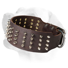 Wide leather collar with 4 rows of spikes for Labradors