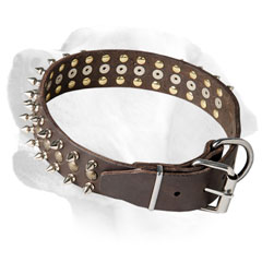 Leather Labrador collar of high quality     material