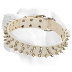 Durable white leather collar with nickel spikes