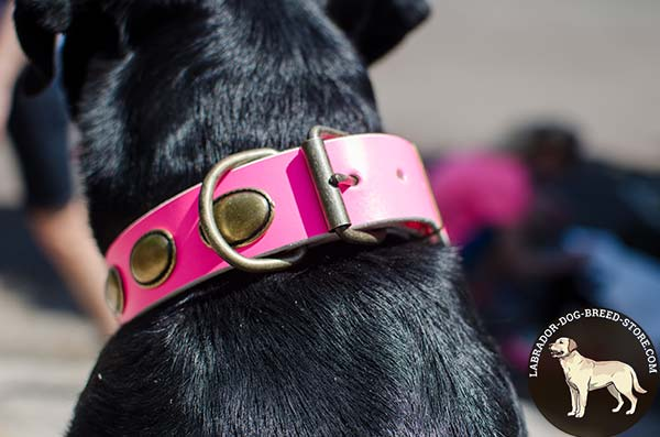 Exquisite Pink Leather Labrador Collar with Brass Plated Oval Plates and Hardware