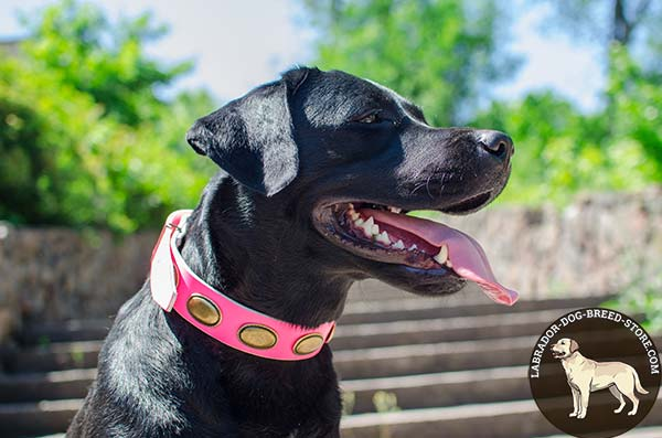 Pink Leather Labrador Collar Adorned with Brass Plated Oval Plates