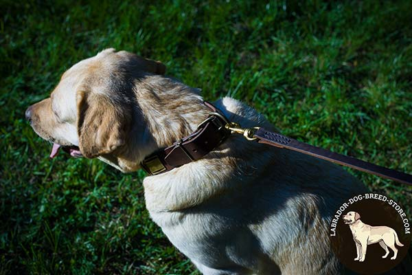 Leather Labrador Collar with Rust Proof Brass Plated Fittings