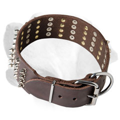 Spiked Labrador collar of leather