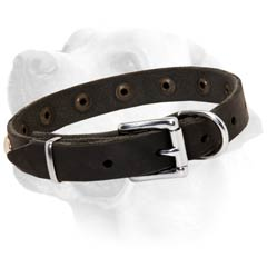 Rustless Buckle on Leather Labrador Collar Strong