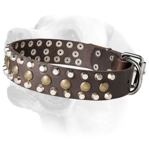 Studded Leather Labrador     Collar