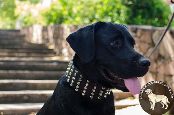Wide Studded Leather Labrador Collar