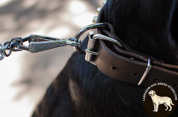 Leather Labrador Collar with Durable Nickel Plated Fittings
