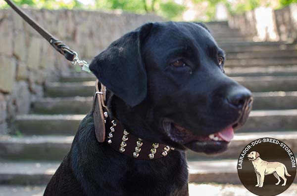 Wide Leather Labrador Collar with Studs