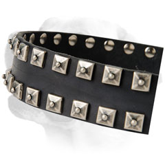 Studs On Comfortable Leather Labrador Collar