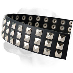 Riveted Nickel Studs On Leather Labrador Collar