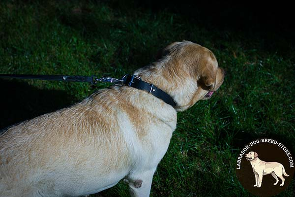 Trendy Leather Labrador Collar for Regular Walking