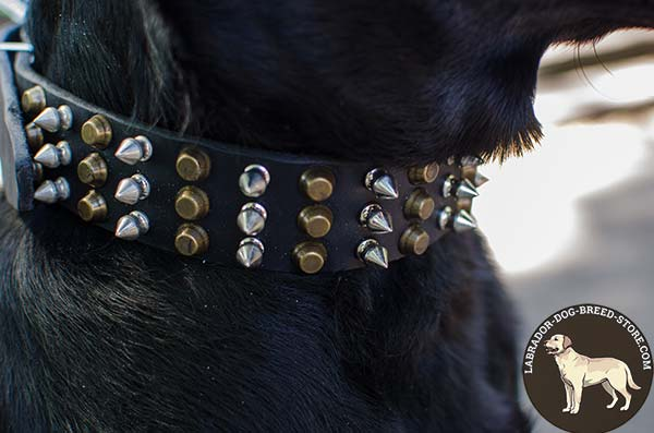 Spiked and Studded Leather Labrador Collar for Walking