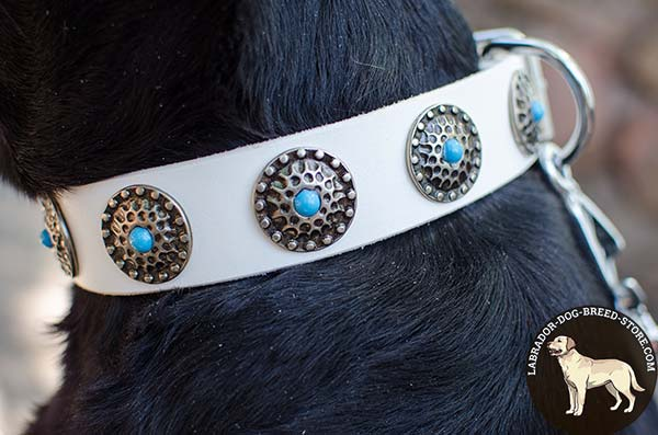 Astounding Walking White Leather Labrador Collar with Lovely Blue Stones