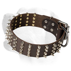 Leather collar for Labrador decorated with spikes