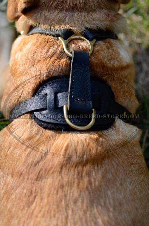 Handmade Leather Dog Harness For Labrador