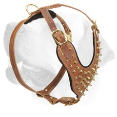Labrador Spiked Decorative Leather Harness