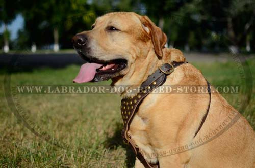 Labrador Harness Leather Durable Decorated