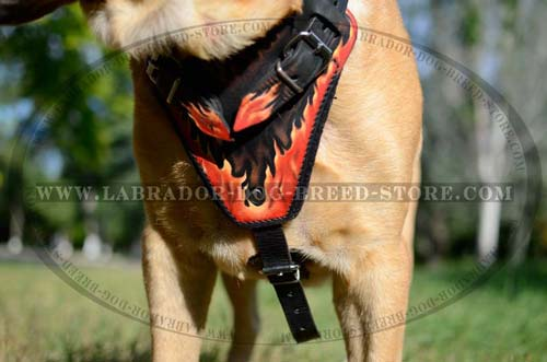 Reliable Leather Labrador Harness With Unique Design