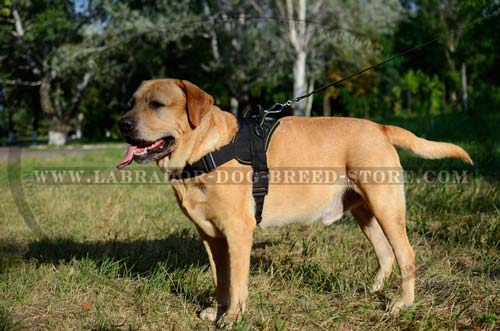 Durable Handmade Nylon Labrador Harness
