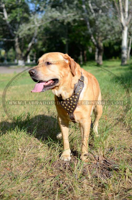 Labrador Handmade Leather Dog Harness With Decor
