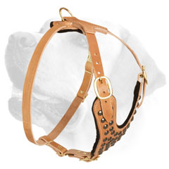 Labrador Leather Harness Of Original Design