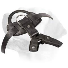 Durable Leather Buckled Harness For Labrador
