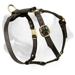 Walking Leather Harness For Labrador