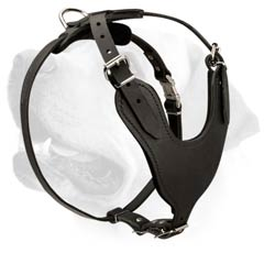 Labrador Leather Walking Harness