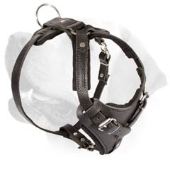 Attack/Agitation Buckled Leather Harness For Labrador