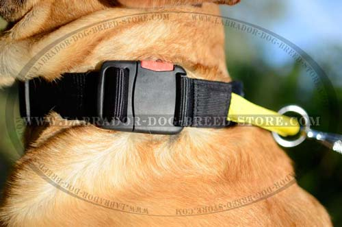 Labrador Nylon Dog Collar