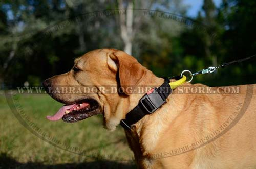 Labrador Durable Nylon Dog Collar