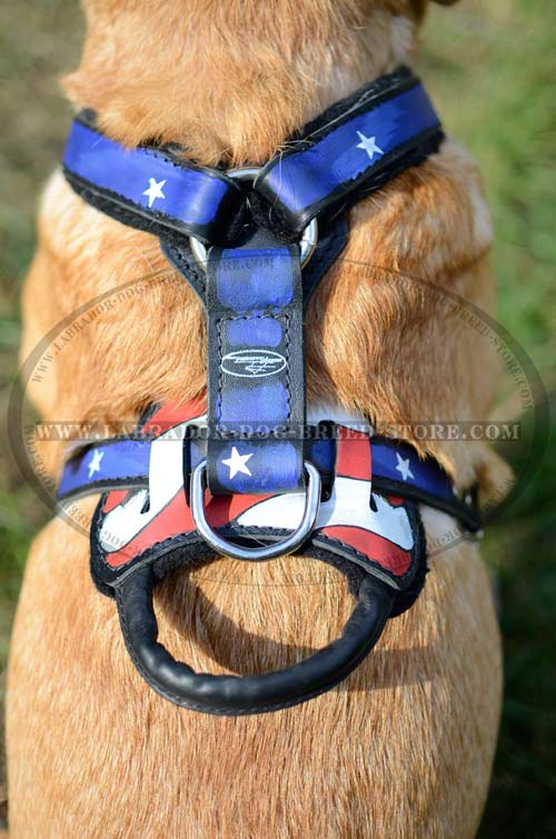Labrador Designer Leather Dog Harness