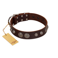 """Choco Brownie"" FDT Artisan Brown Leather Labrador Collar Adorned with Silver-Like Conchos"