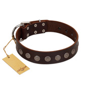 """Starry-Eyed"" Best Quality FDT Artisan Brown Designer Leather Labrador Collar with Small Plates"