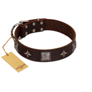 """Cold Star"" Designer FDT Artisan Brown Leather Labrador Collar with Silver-Like Adornments"