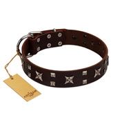"""Bigwig Woof"" FDT Artisan Brown Leather Labrador Collar with Chrome Plated Stars and Square Studs"