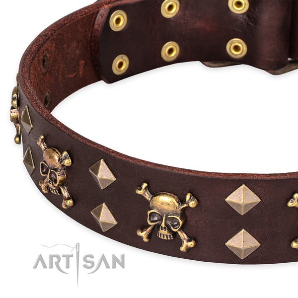 Fancy walking studded dog collar of durable leather