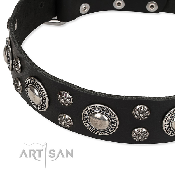 Daily use embellished dog collar of top quality natural leather