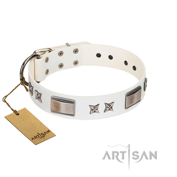 Incredible dog collar of leather