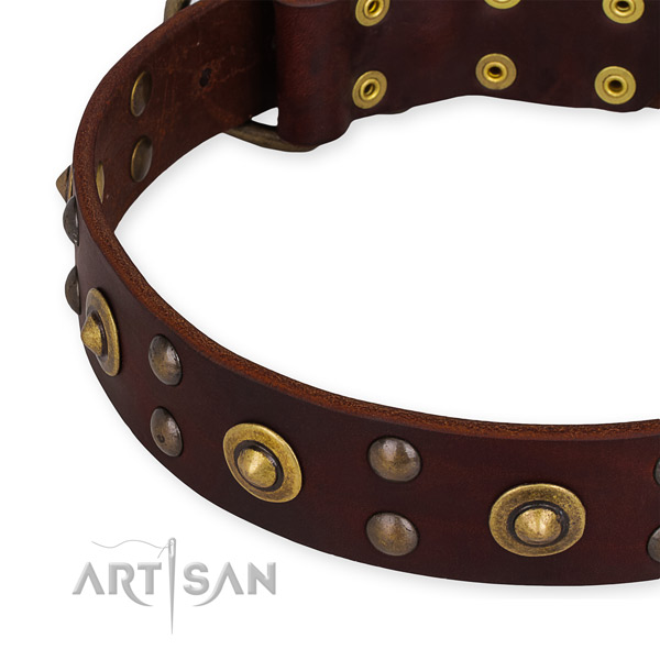 Full grain leather collar with reliable hardware for your stylish four-legged friend