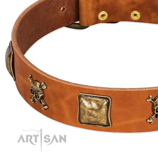 Unique leather dog collar with strong adornments